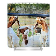 DOH Shower Curtain