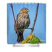 Doing The Spilts Shower Curtain