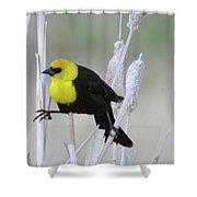 Doing The Splits Shower Curtain