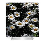 Dollop Of Daises Shower Curtain