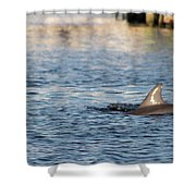 Dolphin By The Dock Shower Curtain