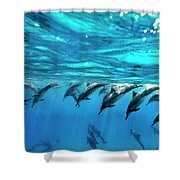 Dolphin Dive Shower Curtain by Sean Davey