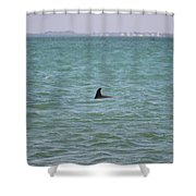 Dolphin Makes An Appearance Shower Curtain