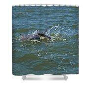 Dolphin Race Shower Curtain