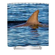 Dolphin Sighting Shower Curtain