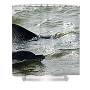 Dolpins In Estero Bay Shower Curtain
