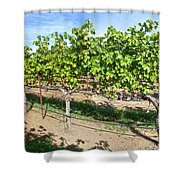 Domaine Chandon Panorama Shower Curtain