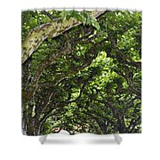 Dome Of Trees Shower Curtain