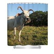 Domestic Animal 02 Shower Curtain