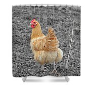 Domestic Feathered Beauty Shower Curtain