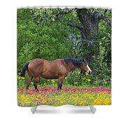 Domestic Horse In Field Of Wildflowers Shower Curtain