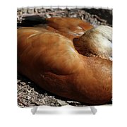 Domestic Mandarin Duck Close Up Shower Curtain