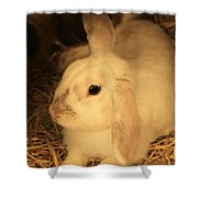 Domesticated Rabbit Shower Curtain