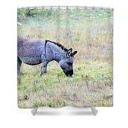 Donkey 005 Shower Curtain