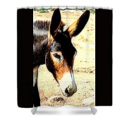 A Donkey Doesn't Need A Rider To Be Happy   Shower Curtain
