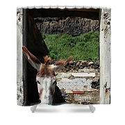 Donkey At The Window Shower Curtain