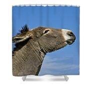 Donkey Demanding A Treat Shower Curtain