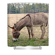 Donkey Finds Greener Grass Shower Curtain