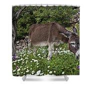Donkey Grazing In Greece Shower Curtain