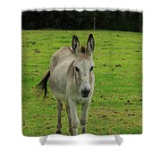 Donkey On A Farm Shower Curtain