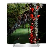 Donkey Tail Blossoms Shower Curtain
