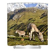 Donkeys Grazing In The Mountains Shower Curtain
