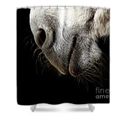Donkey's Mouth Shower Curtain