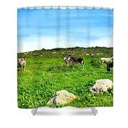 Donkeys Under A Blue Sky In Green Hills Shower Curtain