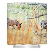 Donky 005 Shower Curtain