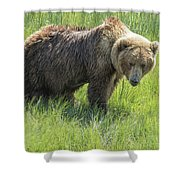 Don't Mess With Mama Bear Shower Curtain by Belinda Greb