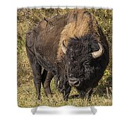 Don't Mess With This Bison Shower Curtain