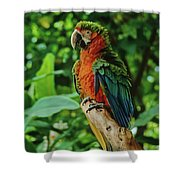 Don't Ruffle My Feathers Shower Curtain