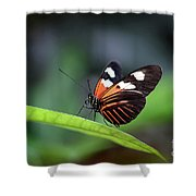 Doris Longwing Butterfly 2017 Shower Curtain