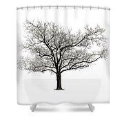 Dormant Shower Curtain