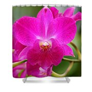 Dendrobium Orchid 2 Shower Curtain