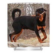 Rottie With A Tail And Stick Shower Curtain