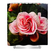 Double Begonia Shower Curtain