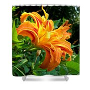 Double Blossom Orange Lily Shower Curtain