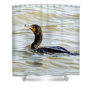 Double-breasted Cormorant Shower Curtain
