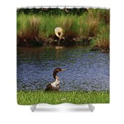 Double-crested Cormorant 2q Shower Curtain