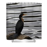 Double-crested Cormorant 20121101_128 Shower Curtain