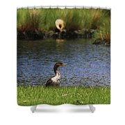 Double-crested Cormorant 3 Shower Curtain