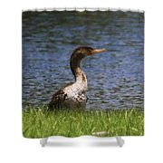 Double-crested Cormorant 4 Shower Curtain