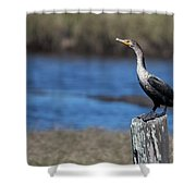 Double-crested Cormorant Shower Curtain