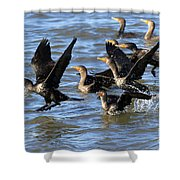 Double Crested Cormorants Shower Curtain
