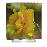 Double Daffodil Shower Curtain