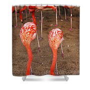 Double Dip Shower Curtain