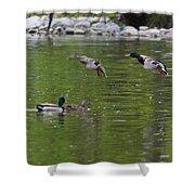 Double Duck Landing Shower Curtain