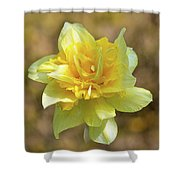 Double Headed Daffodil Shower Curtain