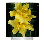 Double Jackpot Daylilies Shower Curtain